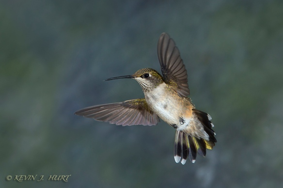 140921_Hummingbird__MG_1745_0027-20140921
