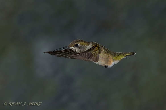 140921_Hummingbird__MG_1862_0103-20140921