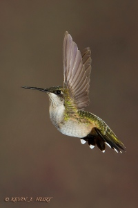 140928_Hummingbirds__MG_2257_0004-20140928